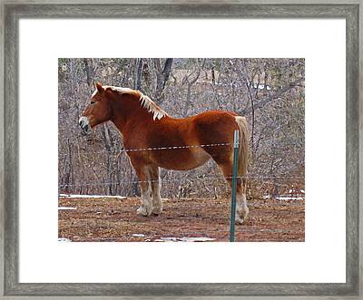Framed Print featuring the photograph Take My Picture by Tammy Sutherland