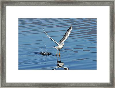 Take Off Framed Print by Dominique De Leeuw