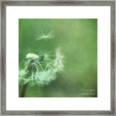 Take Off Framed Print by Priska Wettstein