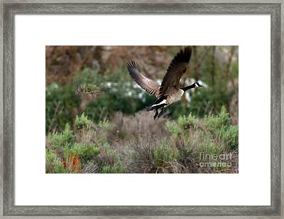 Take Off Framed Print by Robert Bales