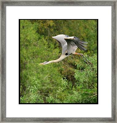 Framed Print featuring the photograph Take Off by Shari Jardina