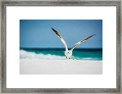 Take Off Framed Print by Shelby  Young