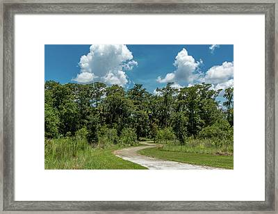 Take The Path Less Traveled Framed Print