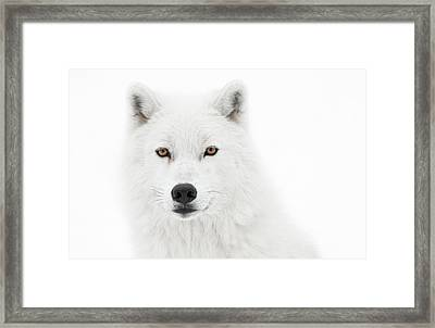 Take The Pose Framed Print by PNDT Photo