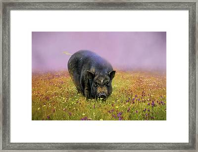 Take Time To Smell The Flowers Pot Bellied Pig Art Framed Print by Jai Johnson