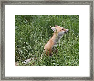 Take Time To Smell The Grasses Framed Print by Royce Howland