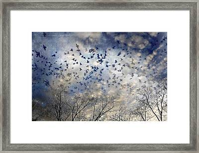 Framed Print featuring the photograph Taken Flight by Jan Amiss Photography