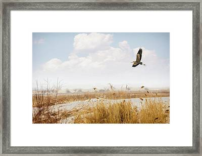 Takeoff Framed Print by Priscilla Burgers