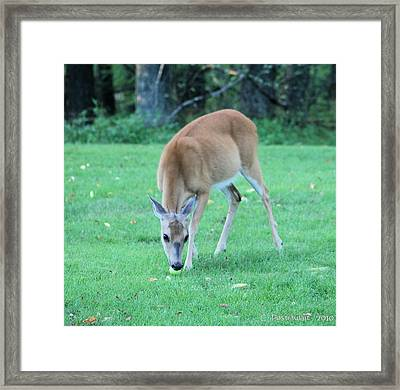 Taking A Bite Framed Print