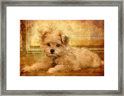 Taking A Break Framed Print by Angie Tirado