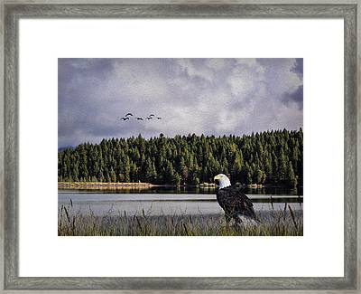 Framed Print featuring the photograph Taking A Break As Evening Falls by Diane Schuster