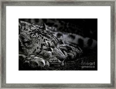 Taking A Break Framed Print by Brad Allen Fine Art