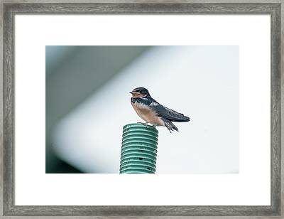 Taking A Break From Flying Around At High Speeds Framed Print by Dan Friend