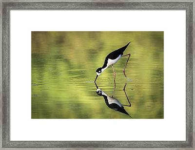 Taking A Dip Framed Print by Emily Bristor