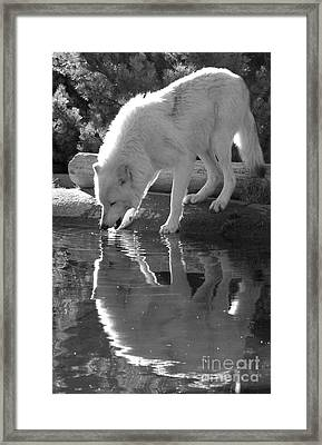 Taking A Sip - Black And White Framed Print