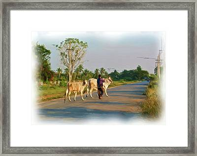 Taking Brahma Home Framed Print