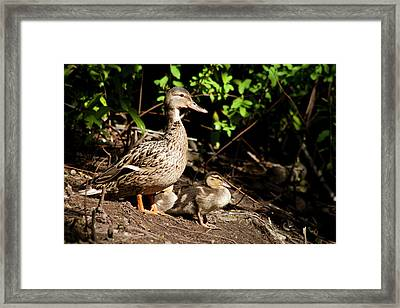 Taking Care Of Mom Framed Print by Monte Arnold
