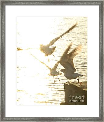 Taking Flight Framed Print by Angie Bechanan