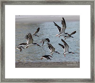 Taking Flight Framed Print by Philip Bracco