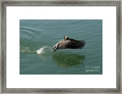 Framed Print featuring the photograph Taking Flight by Rod Wiens
