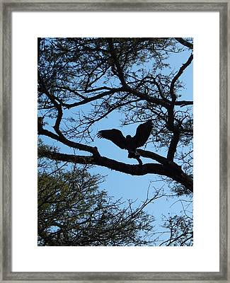 Taking Flight South Africa Framed Print by Patrick Murphy