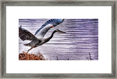 Framed Print featuring the photograph Taking Flight by Sumoflam Photography