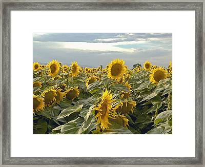 Taking In The Sun Framed Print by James Steele