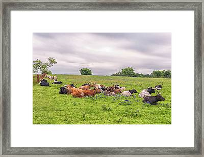 Taking It Easy Framed Print by Victor Culpepper