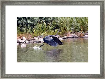 Taking Off  Framed Print by James Steele