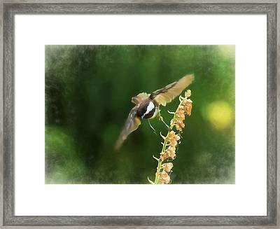 Chickadee In Flight 2 Framed Print by Marilyn Wilson