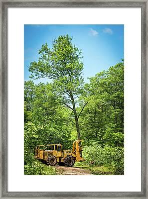 Taking One Of My Oak Trees For A Walk Framed Print by Paul Freidlund