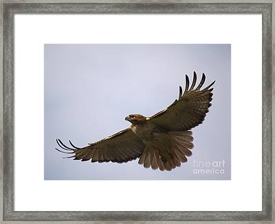 Taking Survey Framed Print