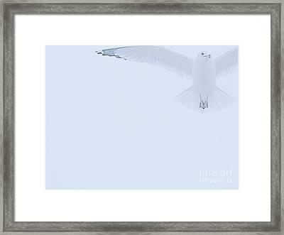Taking Wing Framed Print by Ann Horn