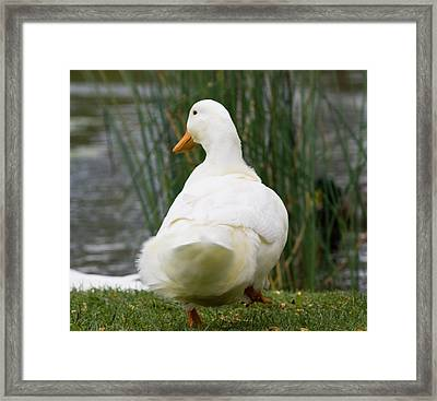 Framed Print featuring the photograph Tale Feathers by Tara Lynn