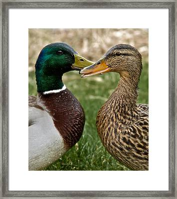 Talk Talk Framed Print by Odd Jeppesen
