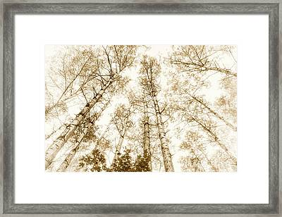 Framed Print featuring the photograph Tall Aspens by Elena Elisseeva