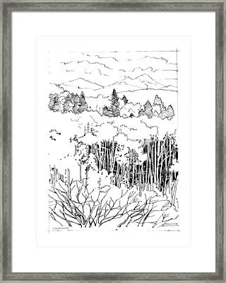 Tall Aspens Rocky Mountains Framed Print by John Lautermilch