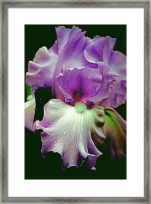 Tall Bearded Iris In Lavender Framed Print by Julie Palencia