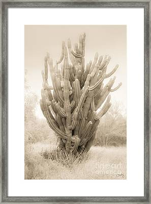 Tall Cactus In Sepia Framed Print