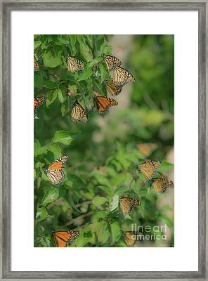 Tall Cluster Framed Print