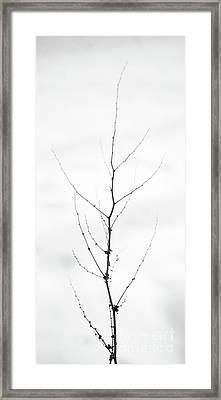 Tall Framed Print by Gabriela Insuratelu