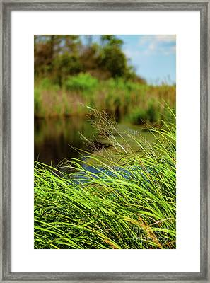 Tall Grass At Boat Dock Framed Print