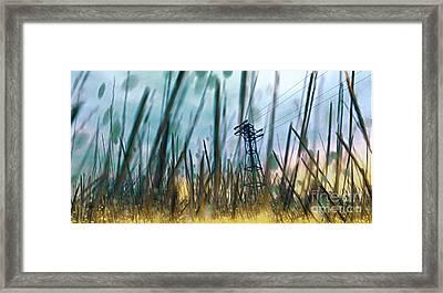 Tall Grass II Framed Print by Carol Pietrantoni