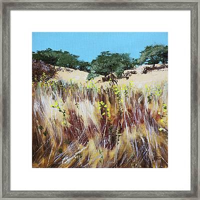 Tall Grass. Late Summer Framed Print