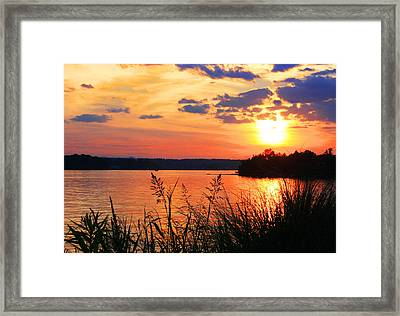 Tall Grass Sunset Smith Mountain Lake Framed Print