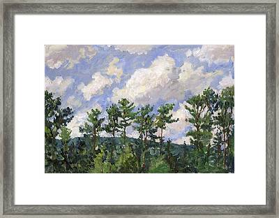 Tall Pines At Tanglewood Framed Print by Thor Wickstrom