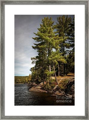 Tall Pines On Lake Shore Framed Print by Elena Elisseeva
