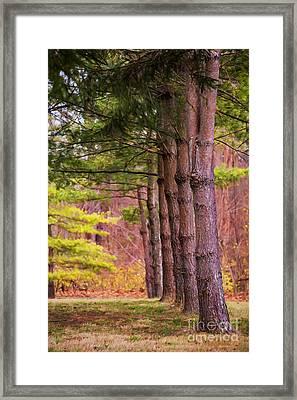Tall Pines Standing Guard Framed Print