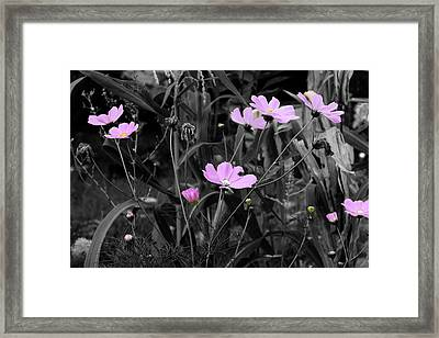 Tall Pink Poppies Framed Print