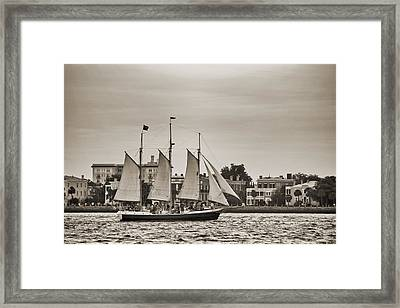 Tall Ship Schooner Pride Off The Historic Charleston Battery Framed Print by Dustin K Ryan